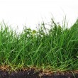 Young grass - Stock Photo