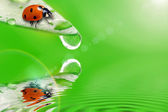 Bright green leaf with ladybug and water drop — Stock Photo