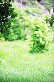 Green bush — Stock Photo
