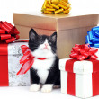 Small cute kitten with gift box — Stock Photo #3567211