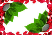 Red petals — Stock Photo