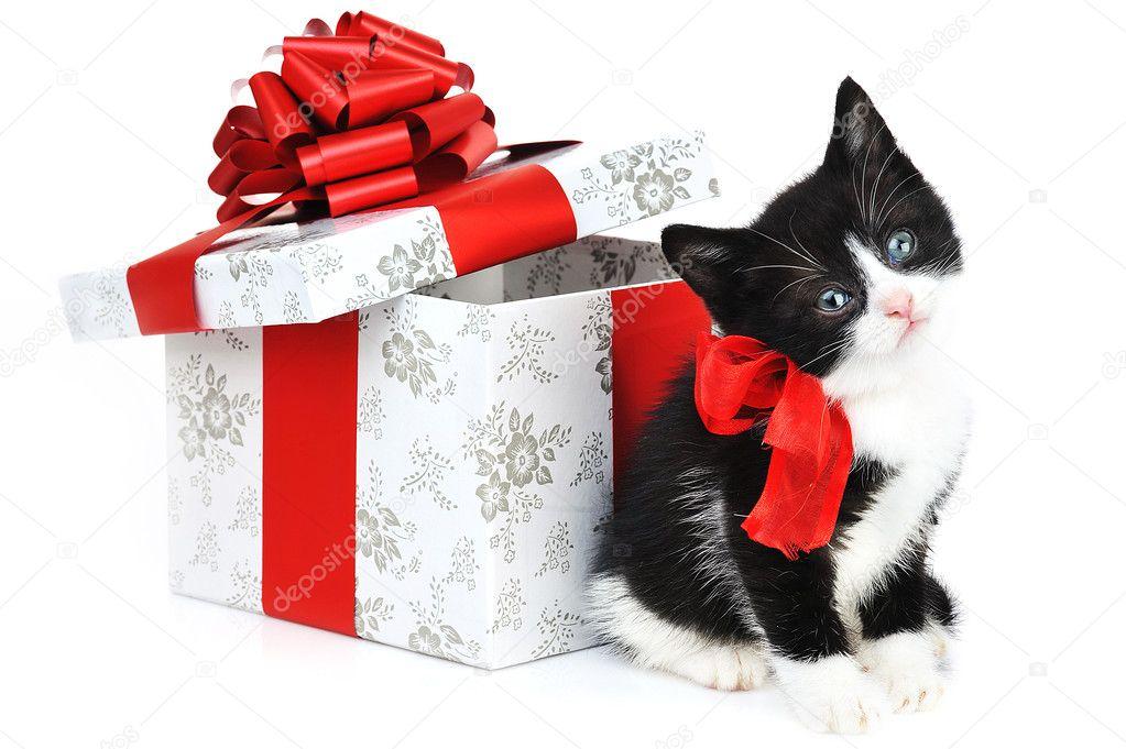 В подарок животное