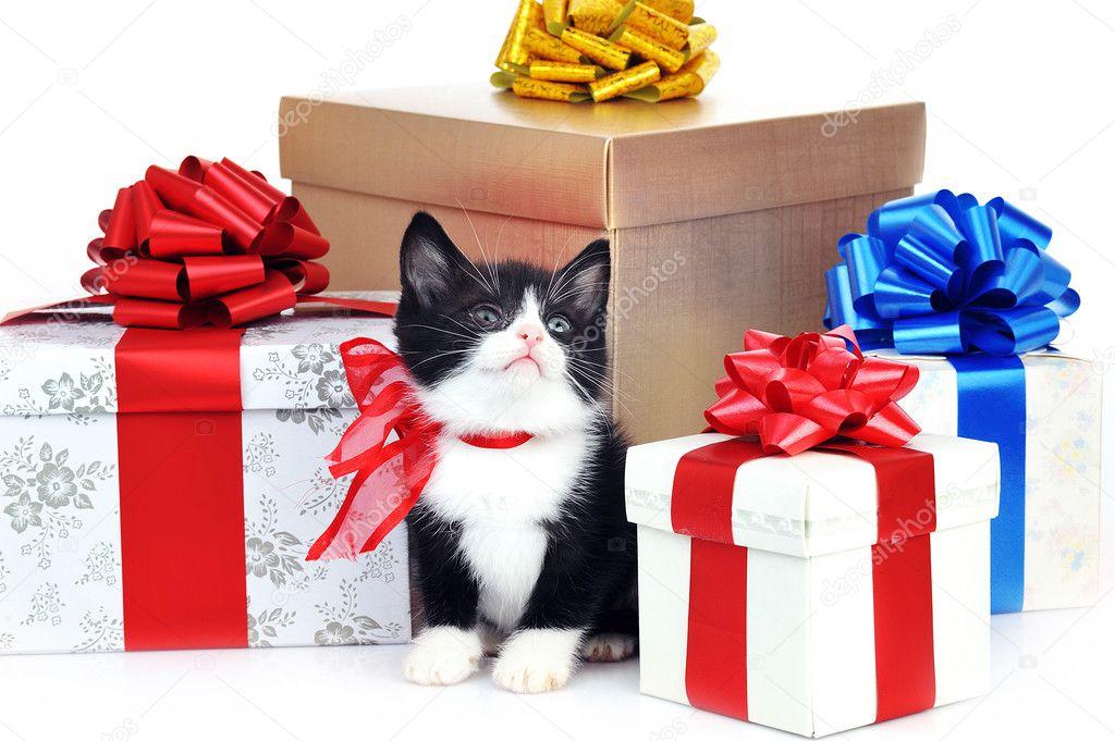 小可爱小猫带礼品盒 — 图库照片08taden1#3567211