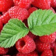 Ripe red raspberries - Stock Photo