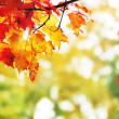 Beautiful colorful autumn  leaves in the park — Stock Photo