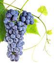 świeżych winogron klastra — Zdjęcie stockowe