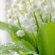 Lily of the valley — Stock Photo #2710367
