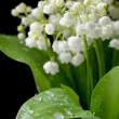 Lily of the valley - Stock fotografie