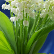 Lily of the valley - Foto Stock