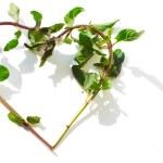 Mint in shape of heart — Stock Photo