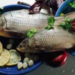 syrové ryby — Stock fotografie