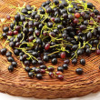 Black currants - Stock Photo
