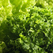 Lettuce and parsley — Stock Photo