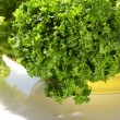 Lettuce and parsley — Stock Photo #2781984