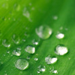 Waterdrops on leaf - Stock Photo