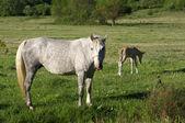 Koń i źrebię — Zdjęcie stockowe