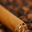 Cigar and tobacco - Stock Photo