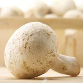 грибы — Стоковое фото