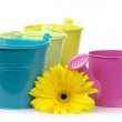 Colorful buckets, watering can and gerbera — Stock Photo #3481082