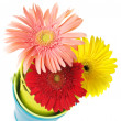Colorful gerberas in buckets — Stock Photo