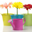 Colorful buckets, watering can and gerberas — Stock Photo #3734251