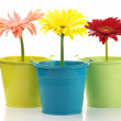 Stock Photo: Colorful buckets with gerberas