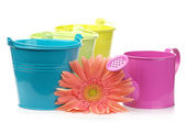 Colorful buckets, watering can and gerbera — Stock Photo
