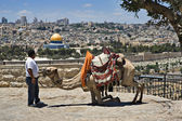 Camel and it's drover in Jerusalem — Foto de Stock