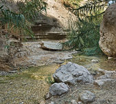 Stream in Negev desert — Stock Photo
