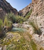 Wiosna w pustyni Negew — Zdjęcie stockowe