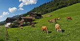 Tyrolean farmland — Stock Photo