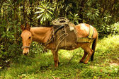 Horse in Cocora valley — Stock Photo