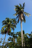 Tropical forest — Stockfoto