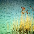 REEDS — Stock Photo #3577356