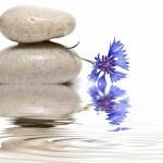 Zen balance with wild flowers 5. — Stock Photo #3558970