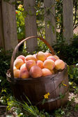 A Basket Full of Peaches on the Ground - — Stock Photo