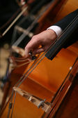 Close-up of a Man Playing Cello — Stock Photo