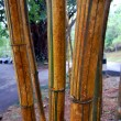 Bamboo bark — Stock Photo