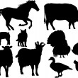 Farm animal vector — Vettoriali Stock