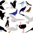 Birds collection vector — Stock Vector