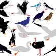 Birds collection vector — Stock Vector #2767014