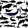 Collection of aquatic wildlife vector si — Stock Vector