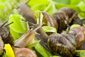 Spring snails background — Stock Photo