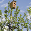 Stock Photo: Small house for birds
