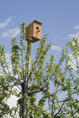 Small house for birds — Stock Photo