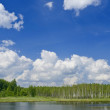 The sky, wood, lake background — Stock Photo