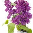 Branch of a lilac and wire — Stock Photo