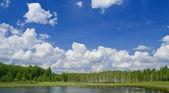 The sky, wood, lake background — Stock Photo