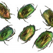 Emerald gold bugs set — Stock Photo