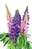Bouquet from bluebonne — Stock Photo